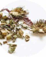 エキナセア ホール<br> Echinacea Purpurea <br> ペット用