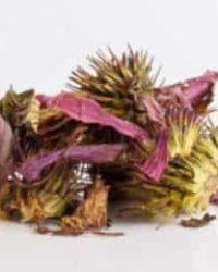 エキナセア purpurea オーガニック