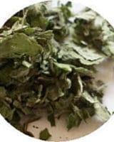 アップルミント <br> バイオダイナミック有機 <br> Organic Apple Mint