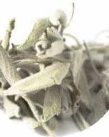 セージ <br> Organic Sage <br> バイオダイナミック有機