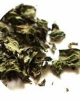 ペパーミント <br> Organic Peppermint <br> バイオダイナミック有機