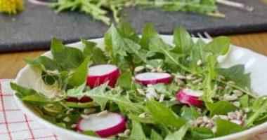 若いたんぽぽの葉サラダ