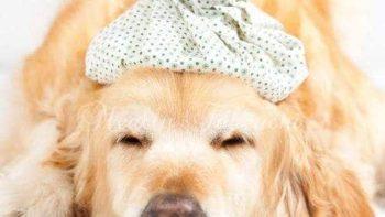 犬と猫の風邪